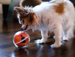 Gadgets for your mollycoddle (Pets)!